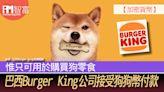【加密貨幣】巴西Burger King公司接受狗狗幣付款 惟只可用於購買狗零食 - 香港經濟日報 - 即時新聞頻道 - iMoney智富 - 環球政經