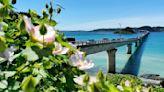 Telework from Okinawa? Japan's remote-friendly job listings surge