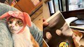 橘白貓佔領印表機他「按彩色列印」 網笑:肚子有亮點!