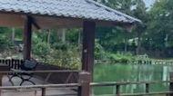 三級警戒遊客少 花蓮飯店近五成休館