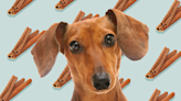 Can Dogs Eat Cinnamon? What to Know Before Dusting Your Dogs Snacks in This Scrumptious Spice