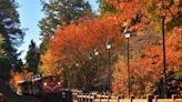 冬遊全台唯一高山鐵道楓紅美景,搭百年國寶級蒸汽火車12月出發 - 活動大聲公 - 微笑台灣 - 用深度旅遊體驗鄉鎮魅力