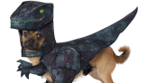 52 Funny Dog Halloween Costumes for the Silliest Pup You Know
