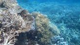 澳洲遊說成功,大堡礁暫時不列入「瀕危」世界遺產
