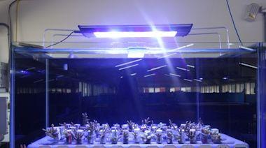 新北市政府最夯線上課程 珊瑚小學堂即將開放報名 | 台灣英文新聞 | 2021-07-19 16:54:38
