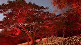 (影)四重溪溫泉公園大變身!楓紅燈海幻境11/8起點亮3個月