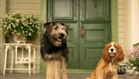 Lady and the Tramp review: A refreshingly humble take on the Disney live-action remake
