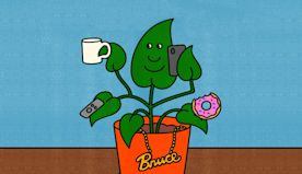 The very specific rules for naming your houseplants, according to scientists