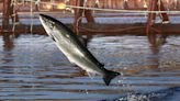 Proposed industrial fish farm faces broad opposition around MDI