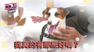 《極島冒險 溜浪玖壹壹》EP02阿弟Outdoor-誰是玖壹壹中的寵物知識王?!
