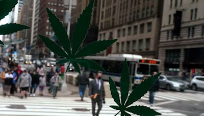 New York in 'unique position' as it competes with New Jersey for marijuana dollars