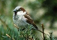 Ornithology (composition) - Wikipedia