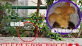 媽媽受重傷仍餵貓B奶 義工正設法營救