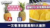 菠蘿鳳梨有分別!一文看清5大差別/20+台灣鳳梨品種一圖睇清