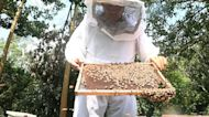 Beekeepers in Colombia denounce pesticides as leading cause in bees' death