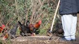 First human case of rare bird flu strain reported in China