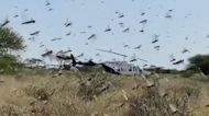 Kenya develops new strategy for containing locusts in East Africa