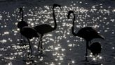 UN biodiversity summit to be delayed for third time - sources
