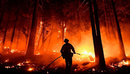 California fires: General Sherman and other sequoias given blankets