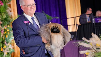 Wasabi the Pekingese wins Best in Show at 145th Westminster Kennel Club Dog Show