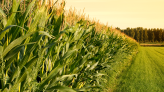 Agco Shares Could Go Either Way