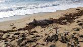 榕樹下村居民發現海豚屍體 漁護署確認屬中華白海豚