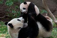Image courtesy of animals.sandiegozoo.org