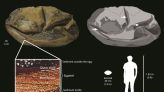 Antarctica's 'deflated football' fossil is world's second-biggest egg