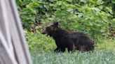 日本札幌熊出沒 馬路狂奔闖軍營4人受傷 | 蘋果新聞網 | 蘋果日報