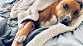 Scam Alert: BBB warns of spike in pet scams due to coronavirus