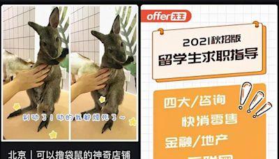 水豚袋鼠當明星,超齡貓狗被嫌棄,萌寵店裡的是生命還是商品?
