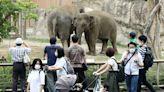 《就算牠沒有臉》:在後疫情時代思考動物園,正視被疫情放大的「災難的臉」 - The News Lens 關鍵評論網