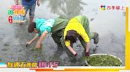 《綜藝新時代》阿翔遭小豬黃沐妍屁拳攻擊 一頭栽進水蓮池裡洗「泥巴浴」