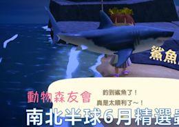 動物森友會攻略:精選南北半球6月蟲魚(含新增蟲魚),好抓好賺好收藏~~ | T客邦