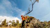 Fire crews struggling to save California giant sequoias