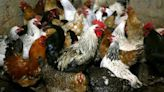 First bird flu death in India this year reported at AIIMS New Delhi