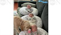 Our hearts are exploding watching this dog love on these 2-month-old triplets