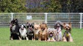 台灣氣候最適合養啥狗?網指1混種