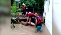 Watch volunteers rescue stray dogs at flooded shelter