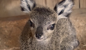 'So cute!' This Florida zoo's video of a newly born baby antelope will make your day