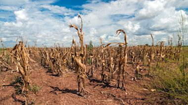 台積電赴美又缺水?亞利桑那州一半土地異常乾旱 美國今夏面臨1千2百年來最大乾旱