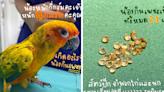 泰國鸚鵡吞主人21顆鑽石 獸醫曝這類鸚鵡都有這特性