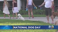 Aug. 26 Is National Dog Day