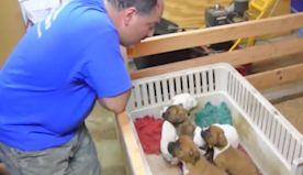 Man melts hearts singing puppies to sleep