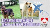 【要走一齊走】動物移民需提前一年準備 部分港人愛養犬隻或受限制入境