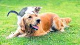 How Your New Cat or Dog Will Impact Your Wallet