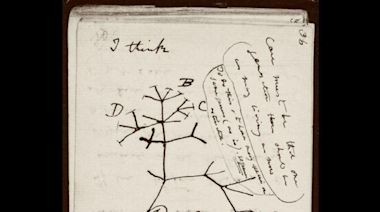 """Darwin's early notebooks on evolution feared """"stolen"""" from Cambridge"""