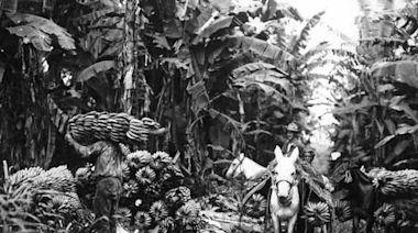 魔幻拉美》【中美洲獨立200週年特輯】文字力量:改拿筆桿的香蕉工人 - 自由評論網