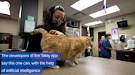 WEB EXTRA: Cat App To Help Determine How Your Pet Is Feeling