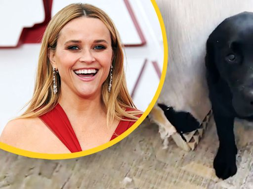 Reese Witherspoon's New Puppy Ate Her Couch In Adorable Insta-Story